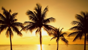 Palm Free HD Wallpapers