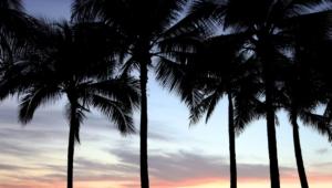 Palm HD