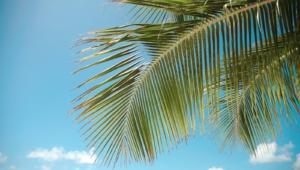 Palm HD Background