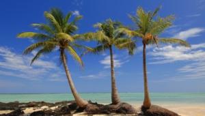 Palm HD Desktop