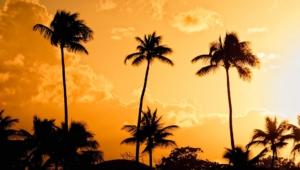 Palm HD Wallpaper