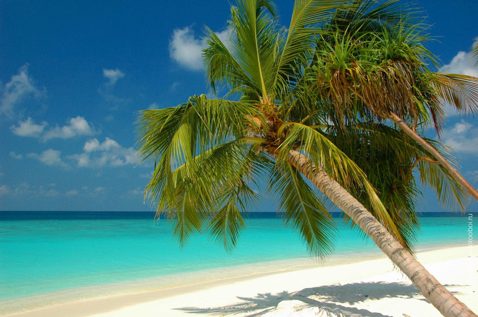 Palm High Definition Wallpapers
