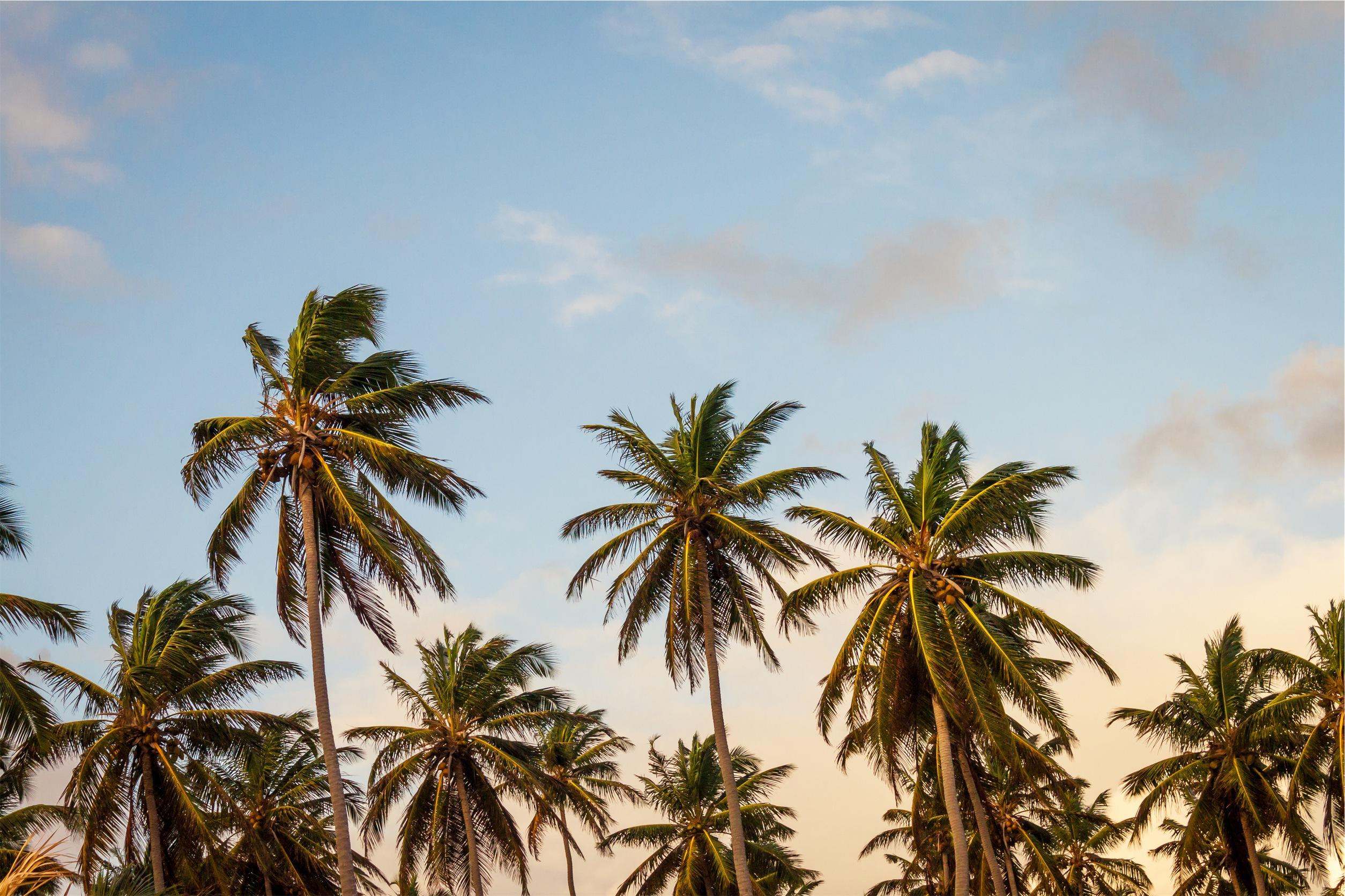 Palm High Definition