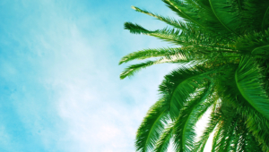 Palm High Quality Wallpapers