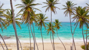 Palm Images