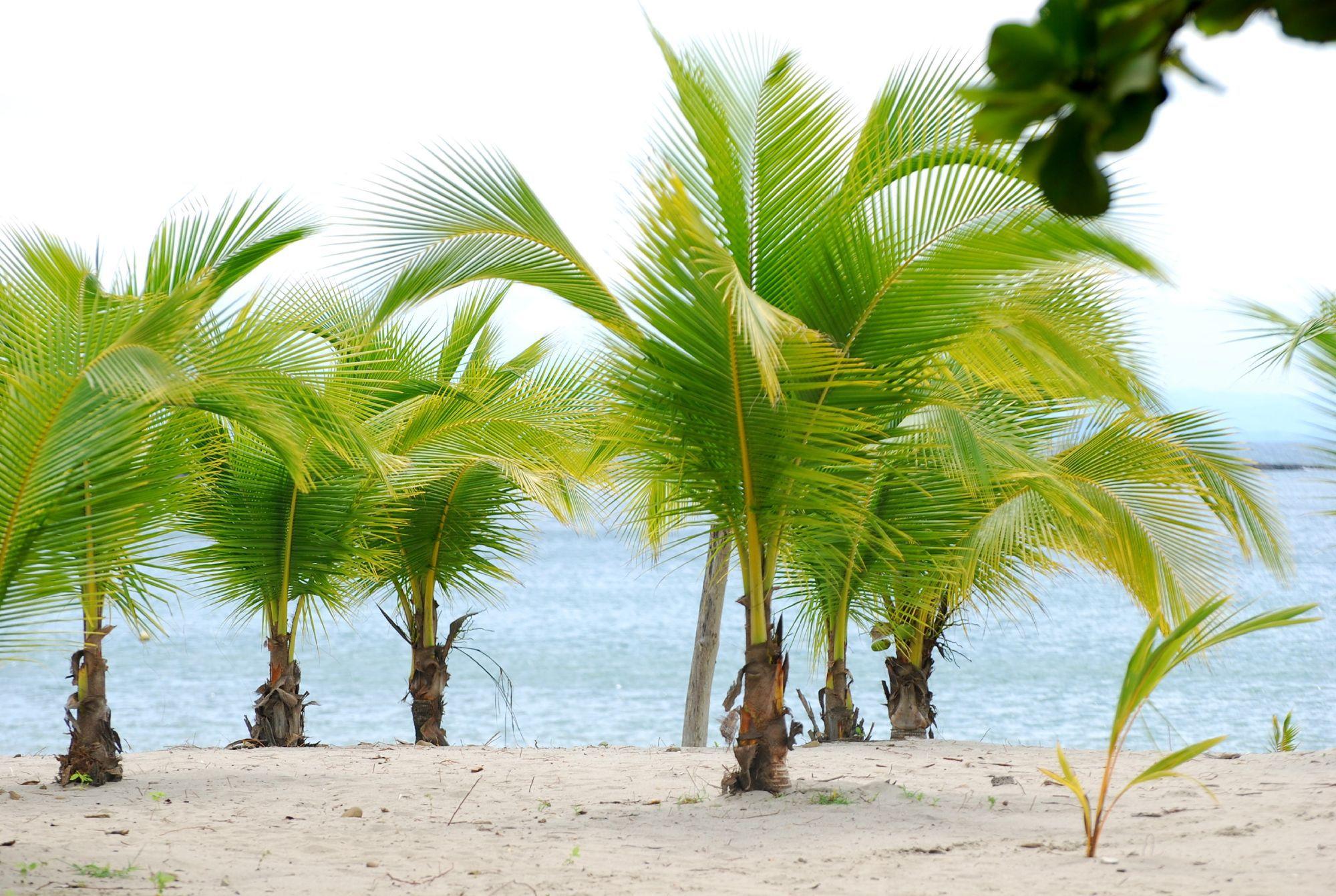 Palm Photos