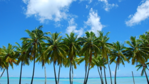 Palm Wallpapers And Backgrounds