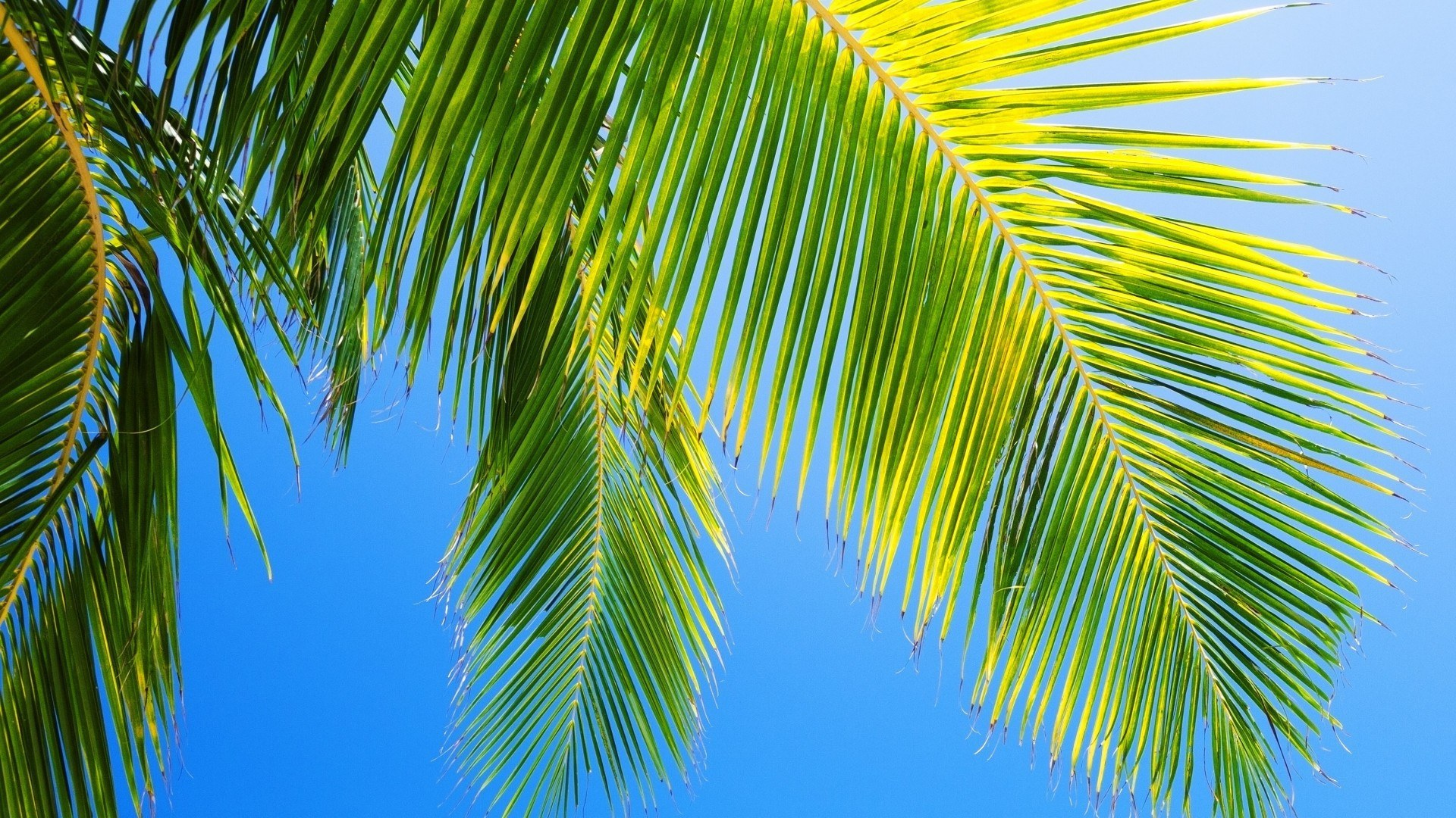 Palm Wallpapers