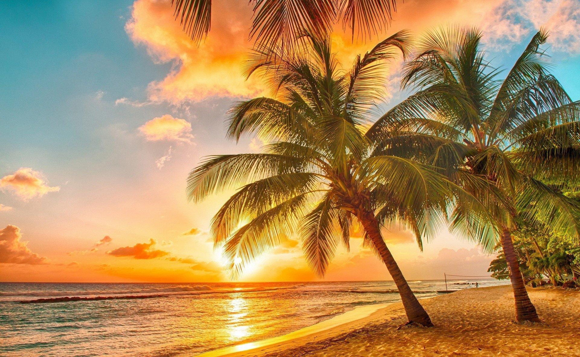 Palm Widescreen