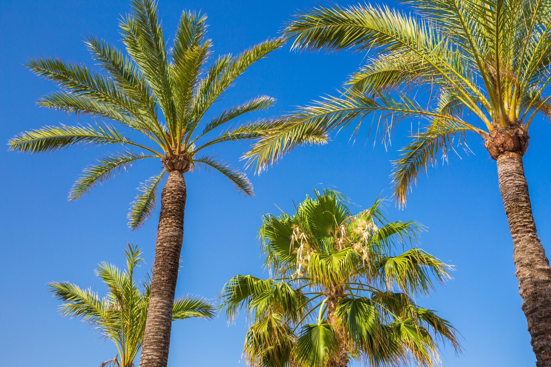 Palm Full HD