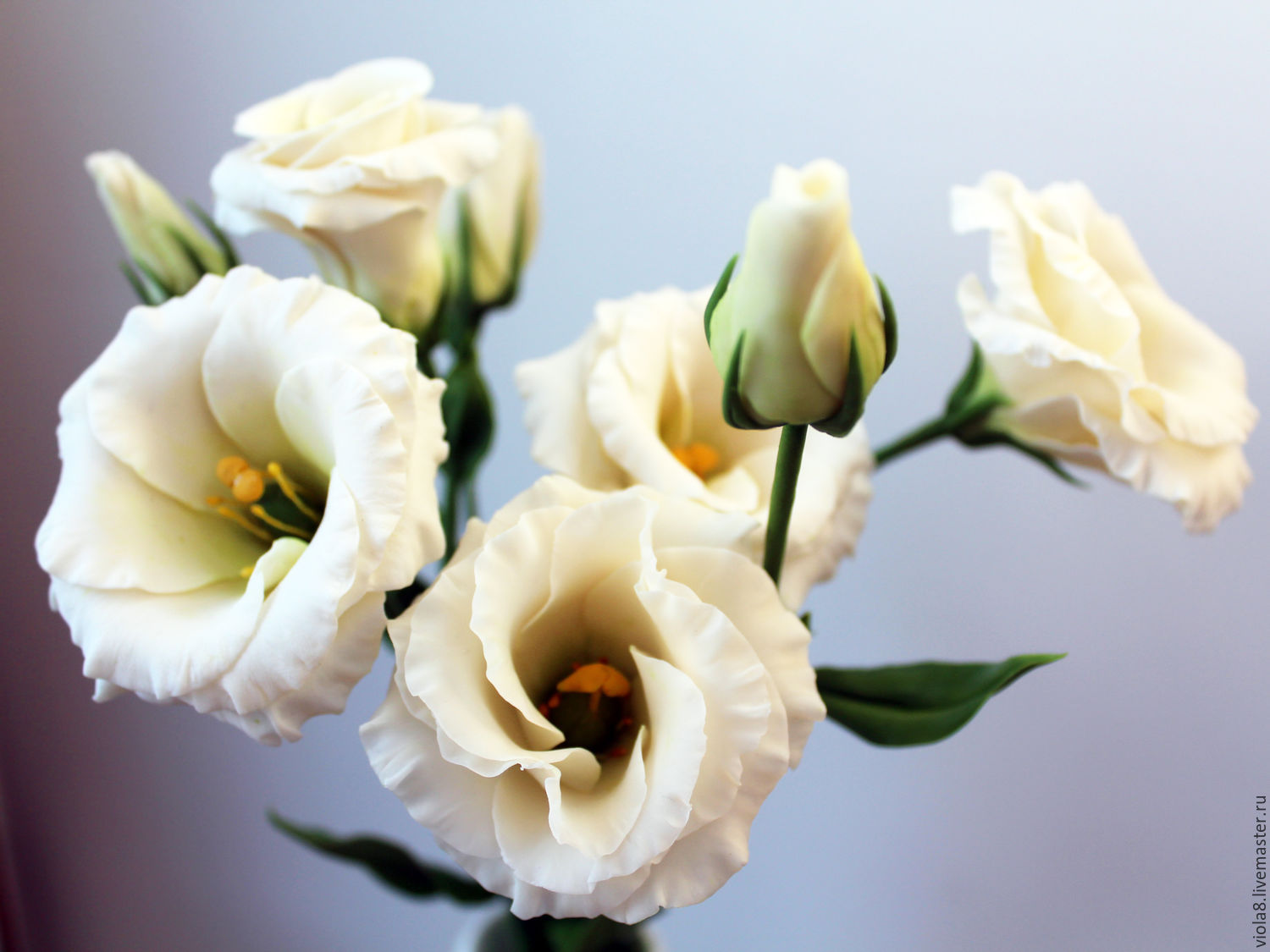 Pictures Of Lisianthus