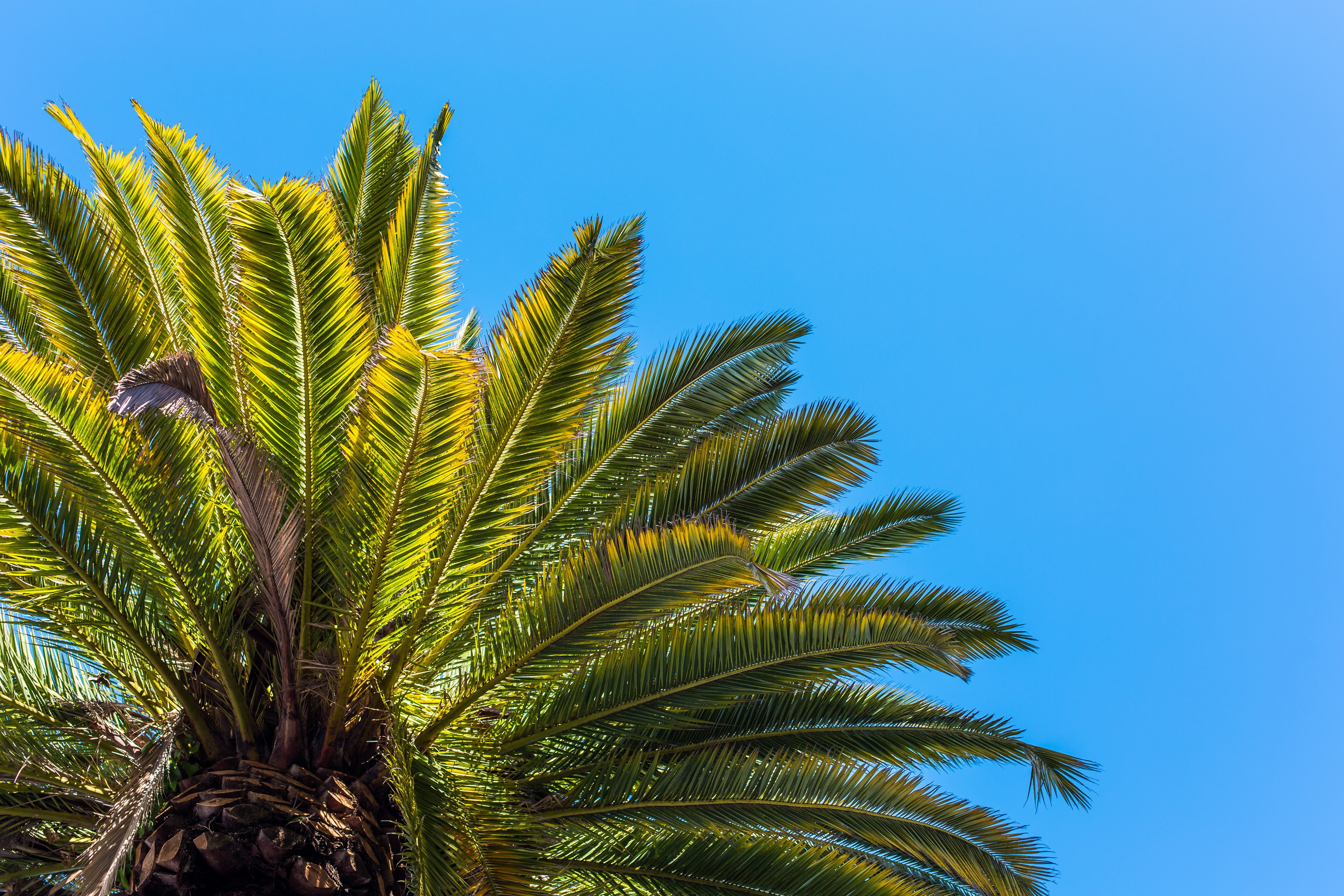 Pictures Of Palm