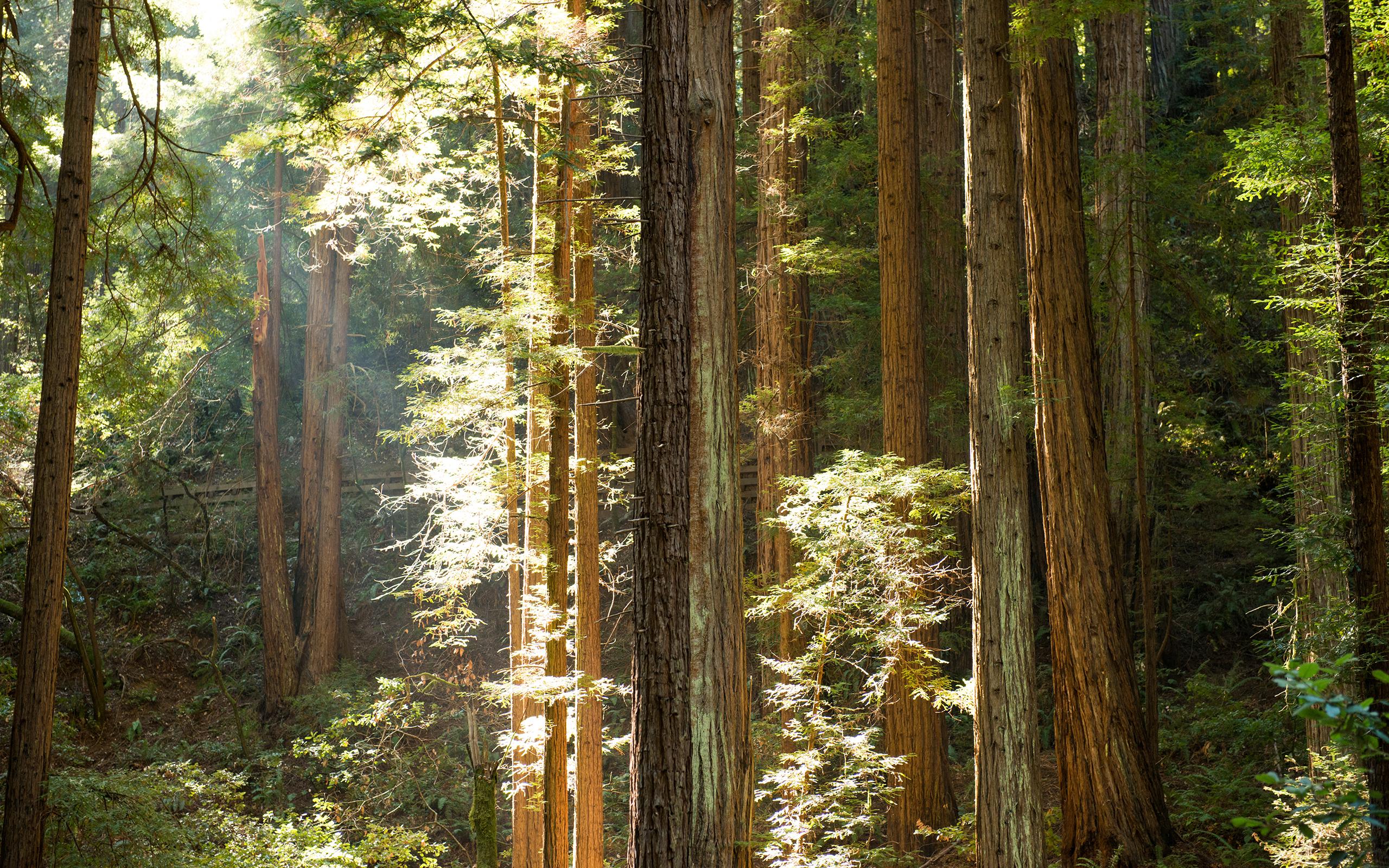 Redwood 4K
