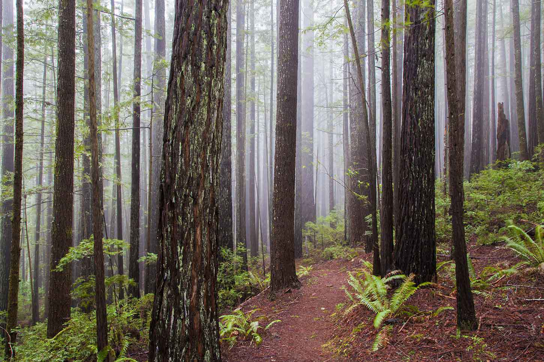 Redwood HD Desktop