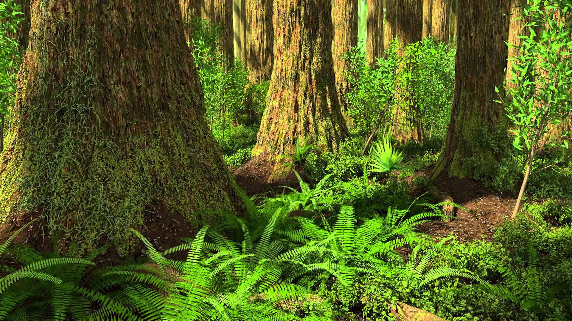Redwood HD Wallpaper