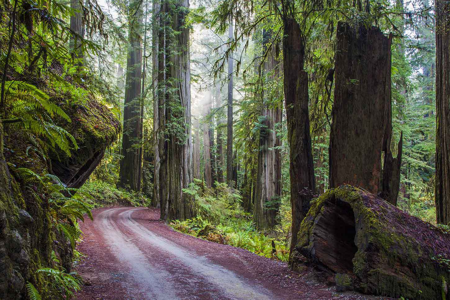 Redwood High Definition Wallpapers