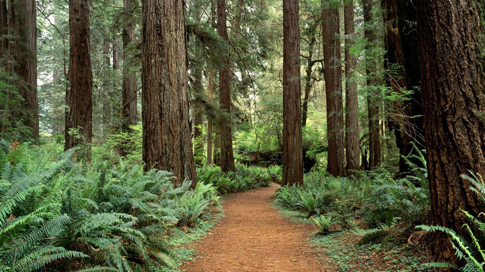 Redwood Photos