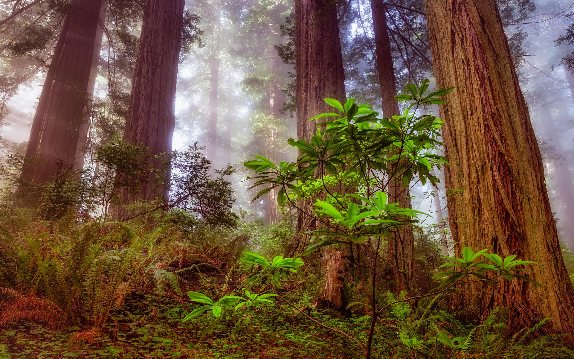 Redwood For Desktop