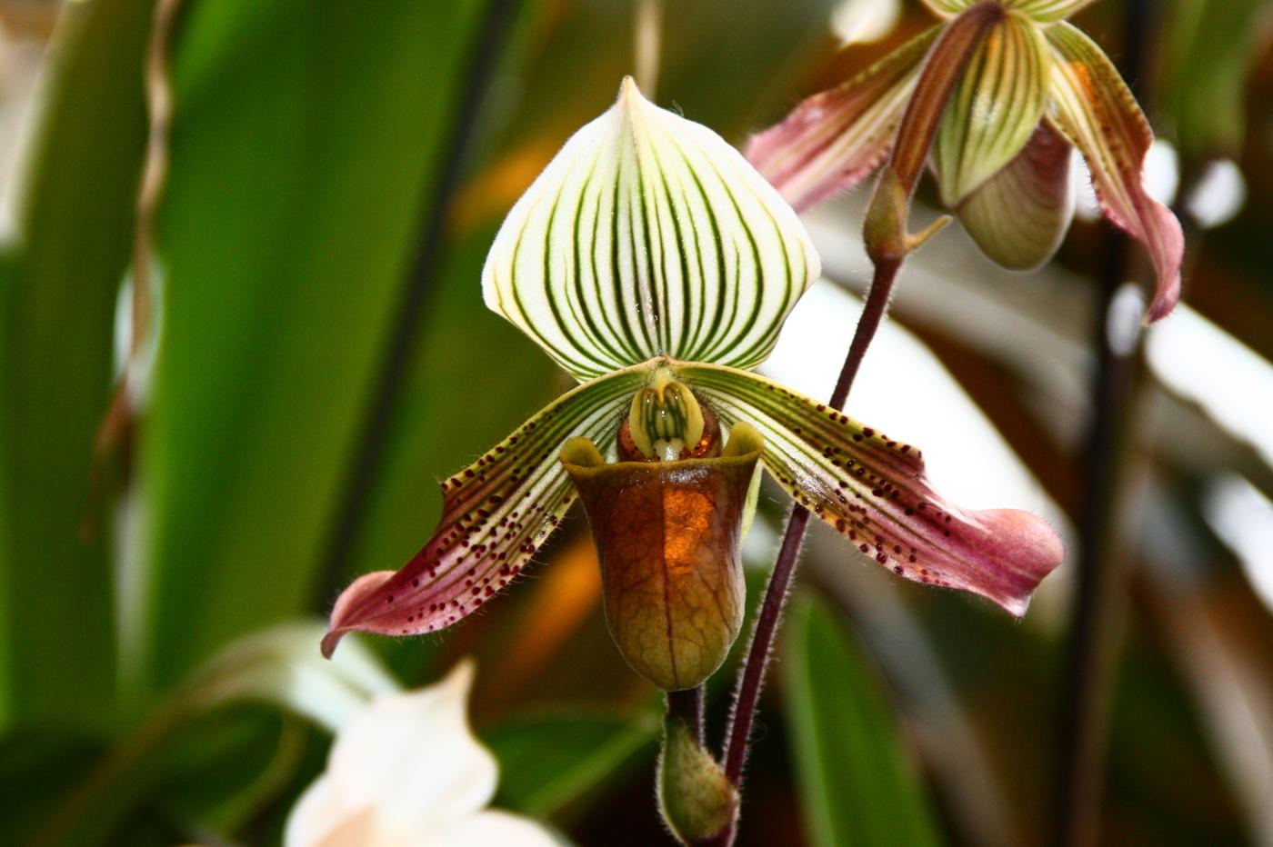 Shenzhen Nongke Orchid Background