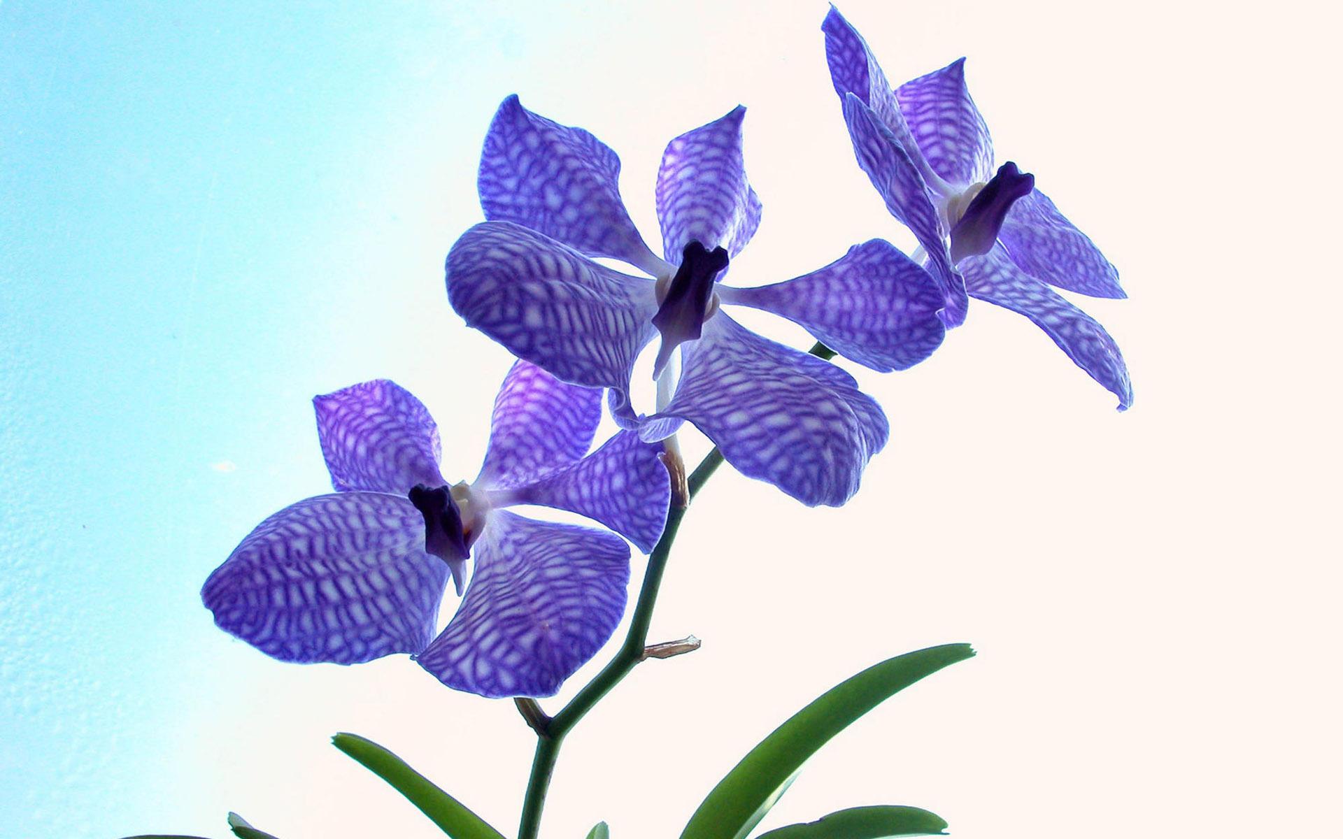 Shenzhen Nongke Orchid Desktop