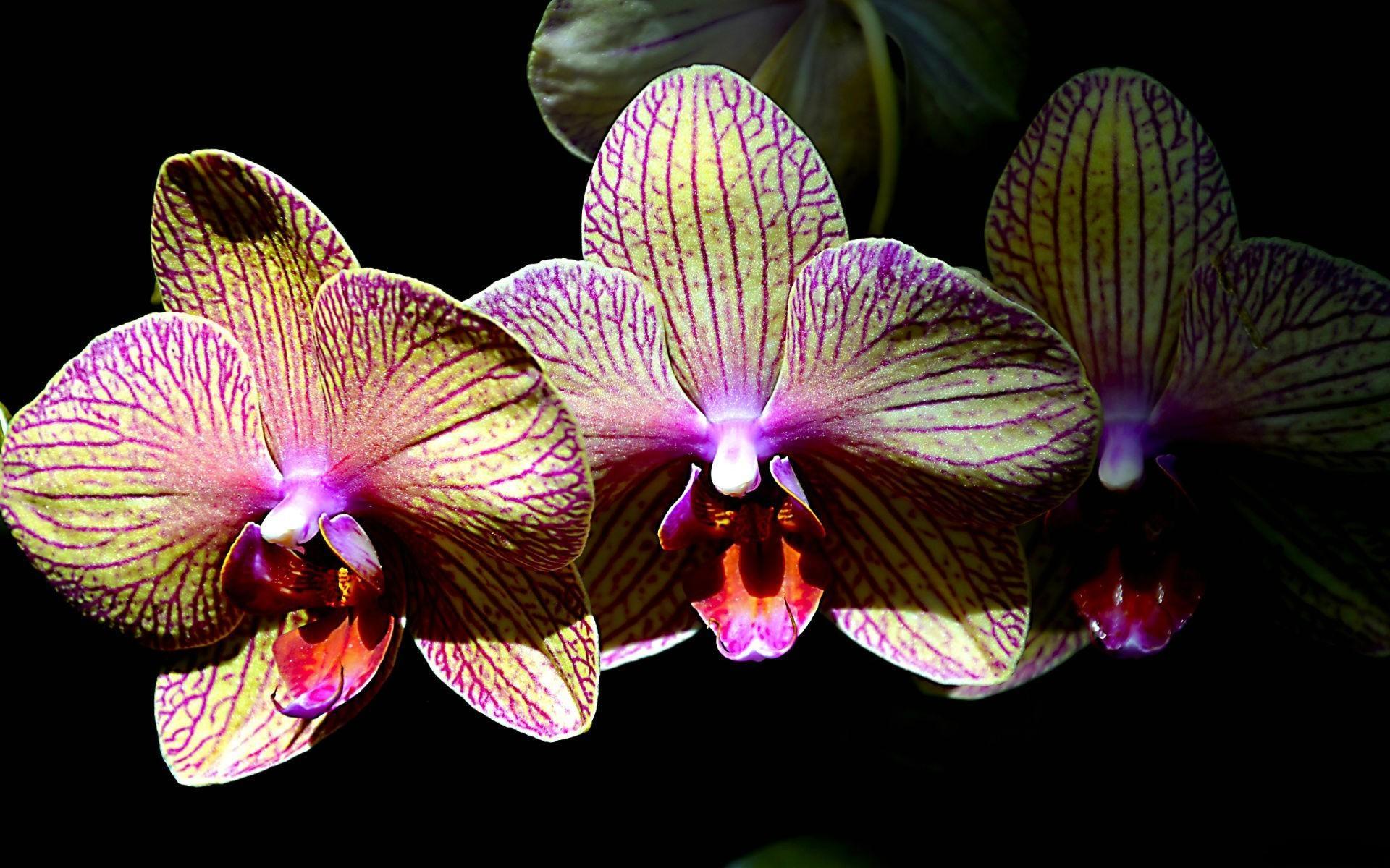 Shenzhen Nongke Orchid Download