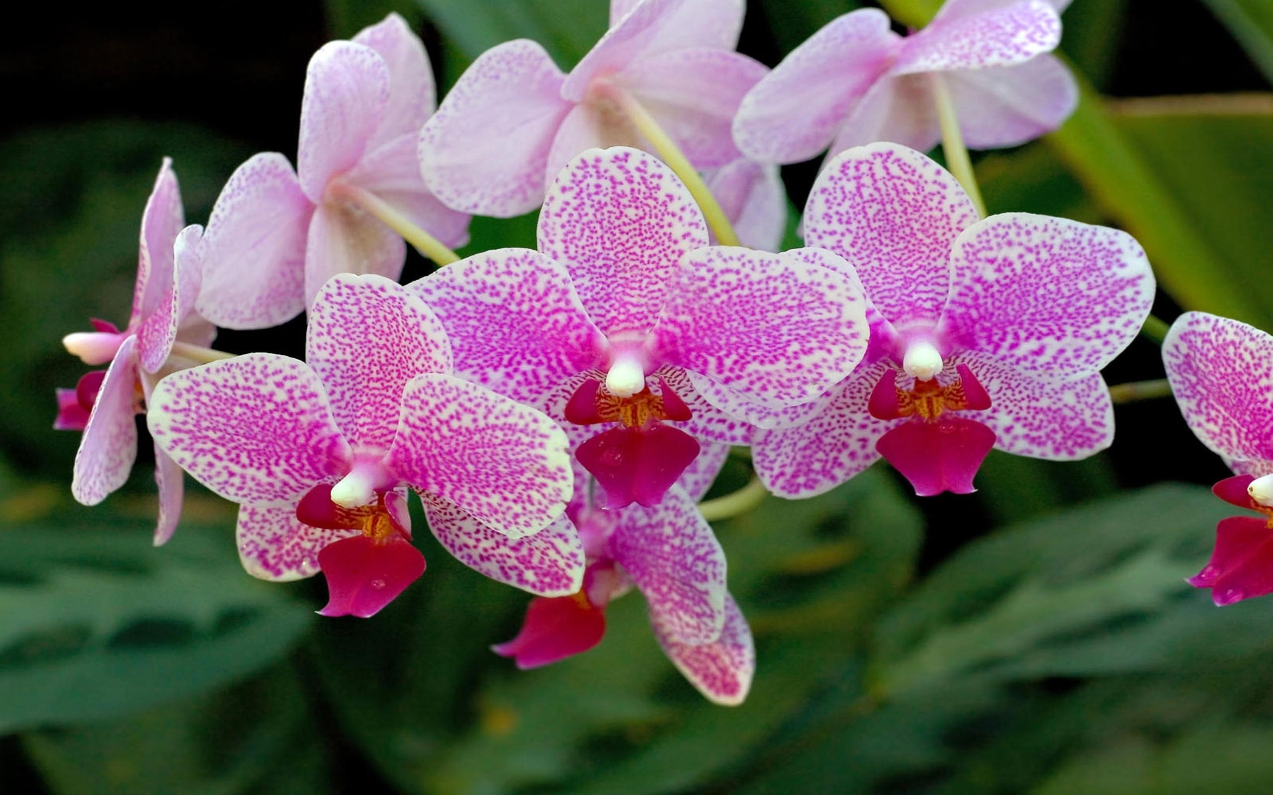 Shenzhen Nongke Orchid Free Download