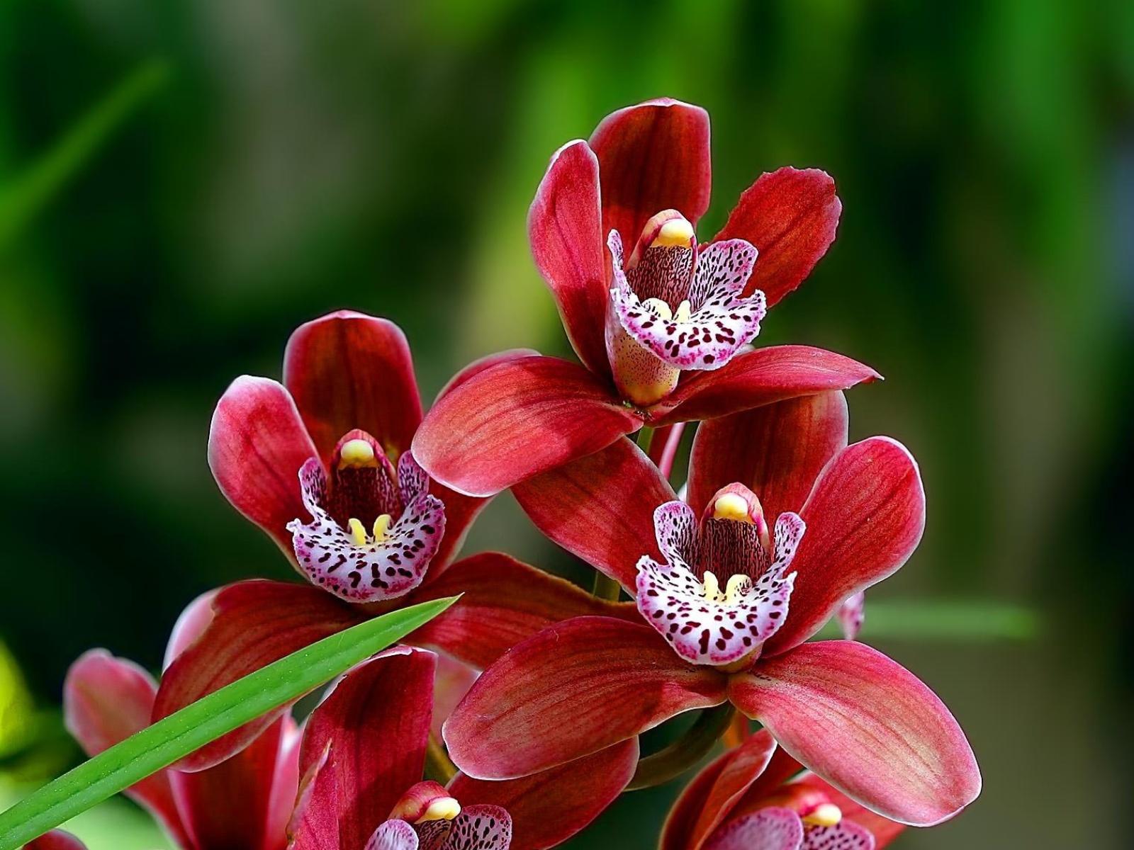 Shenzhen Nongke Orchid Images