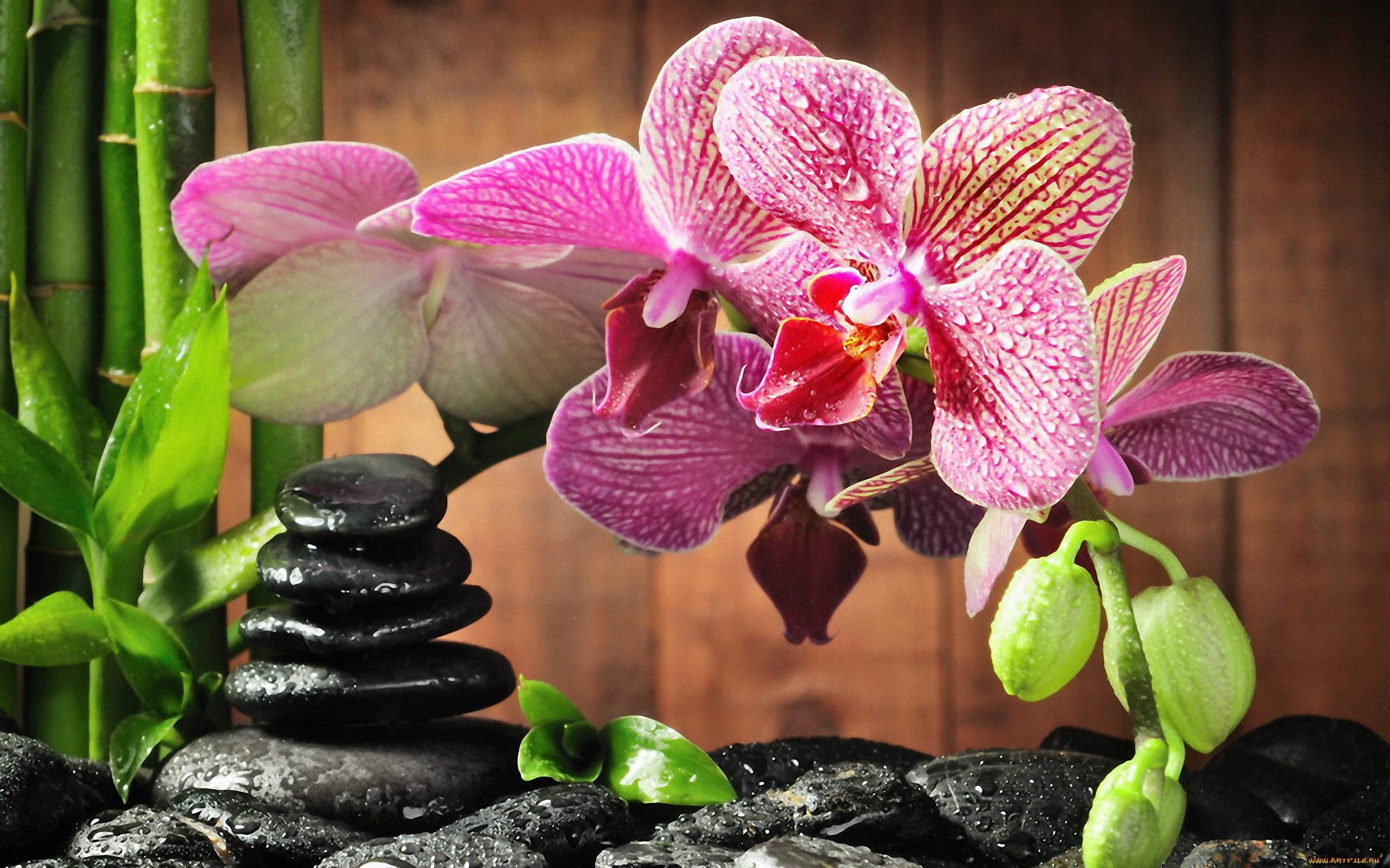 Shenzhen Nongke Orchid Photos