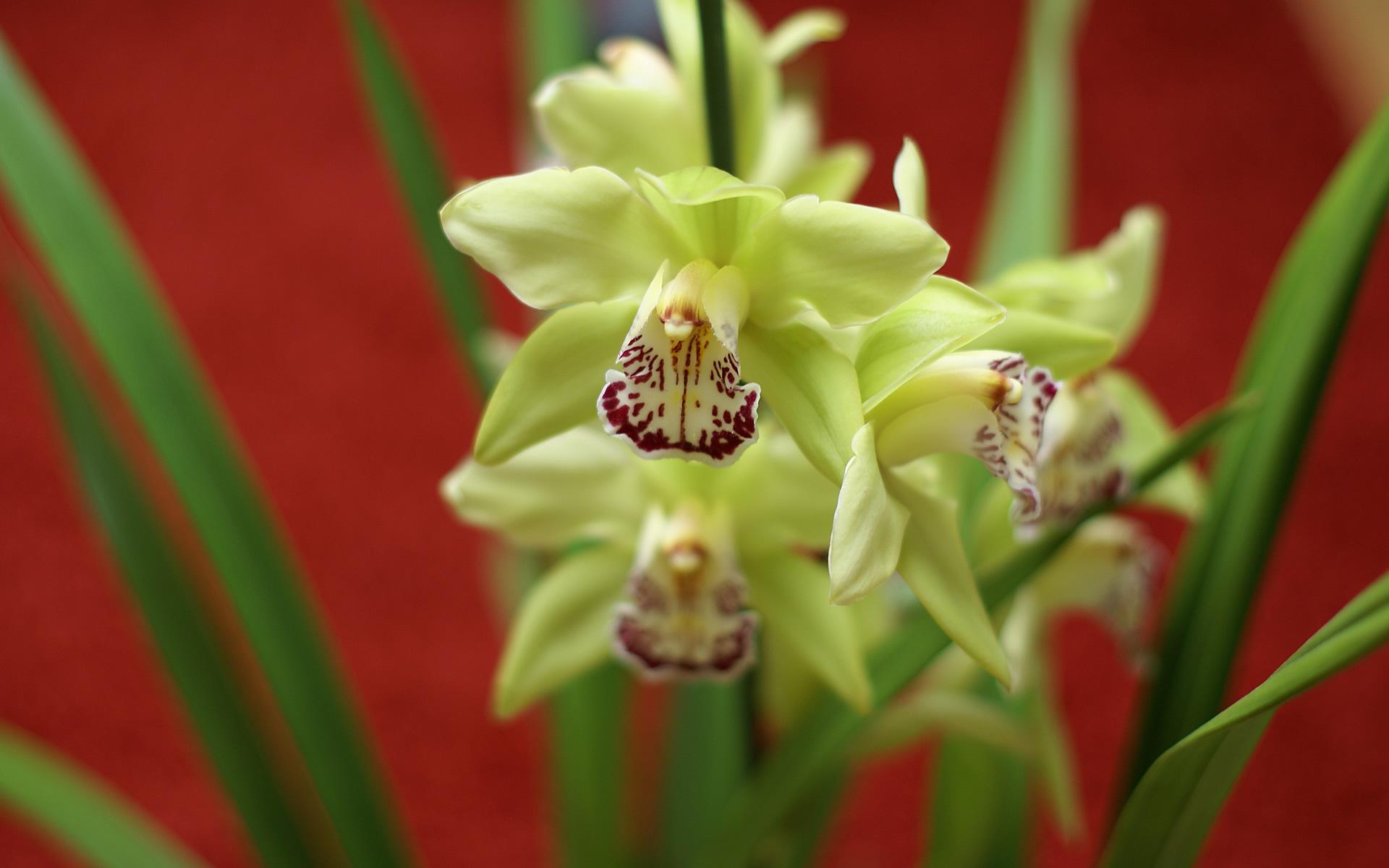 Shenzhen Nongke Orchid Full HD