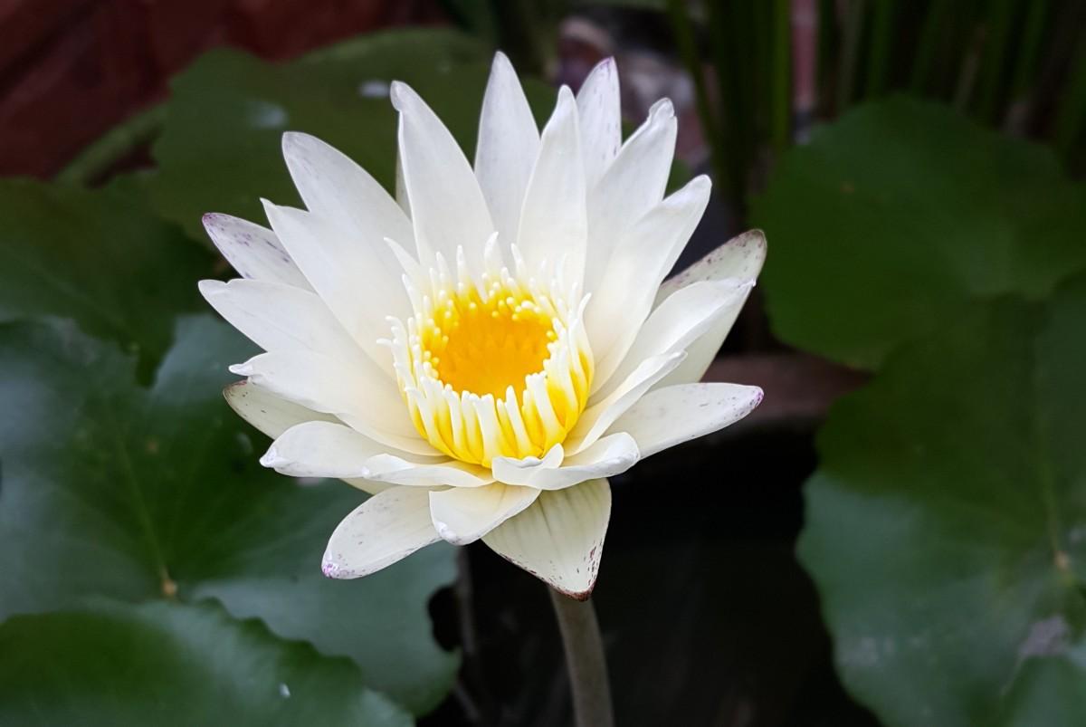 White Lotus HD Desktop