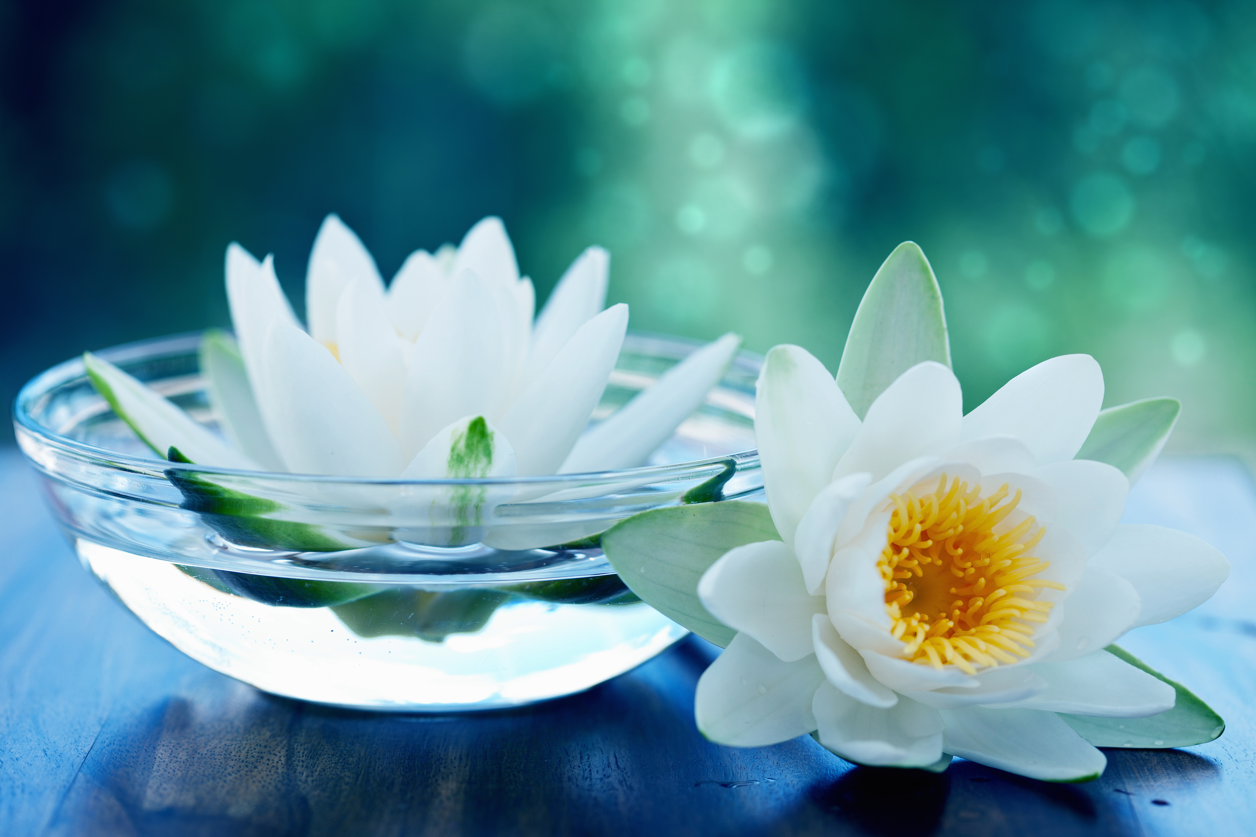 White Lotus High Definition Wallpapers