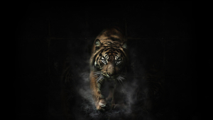 Tiger Computer Backgrounds