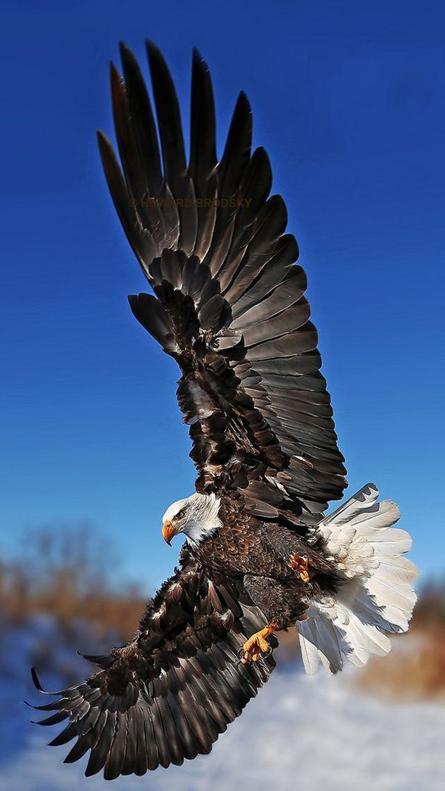 Eagle Hd Iphone