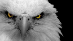 Eagle High Definition