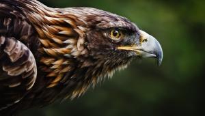 Eagle Widescreen
