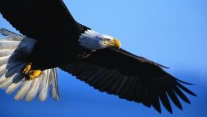 Eagle For Desktop