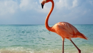 Flamingo High Quality Wallpapers For Iphone