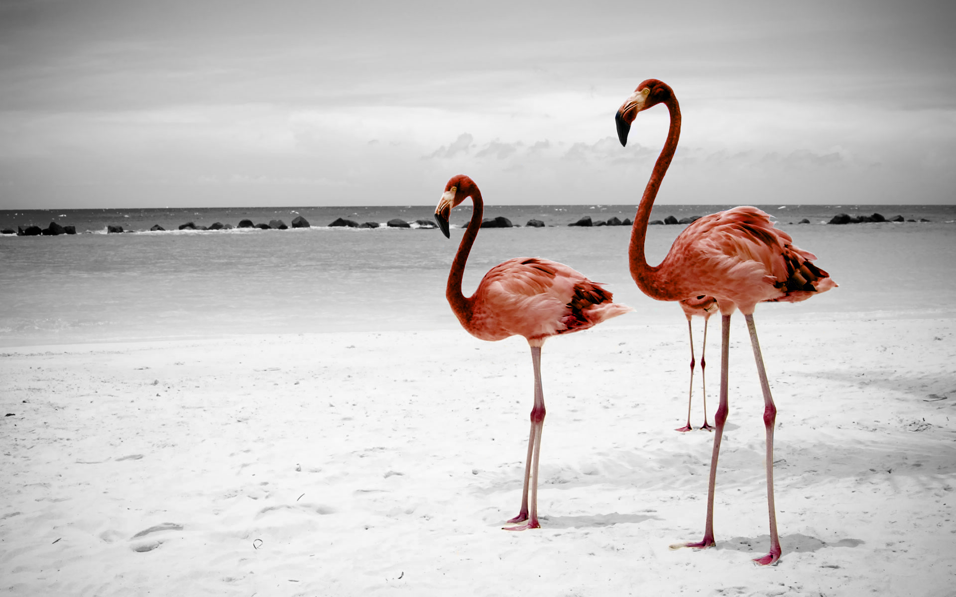 Flamingo Wallpapers Images Photos Pictures Backgrounds