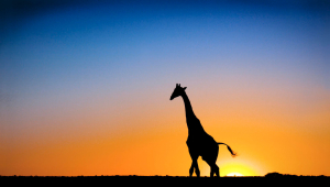 Giraffe For Desktop