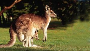 Kangaroo Desktop
