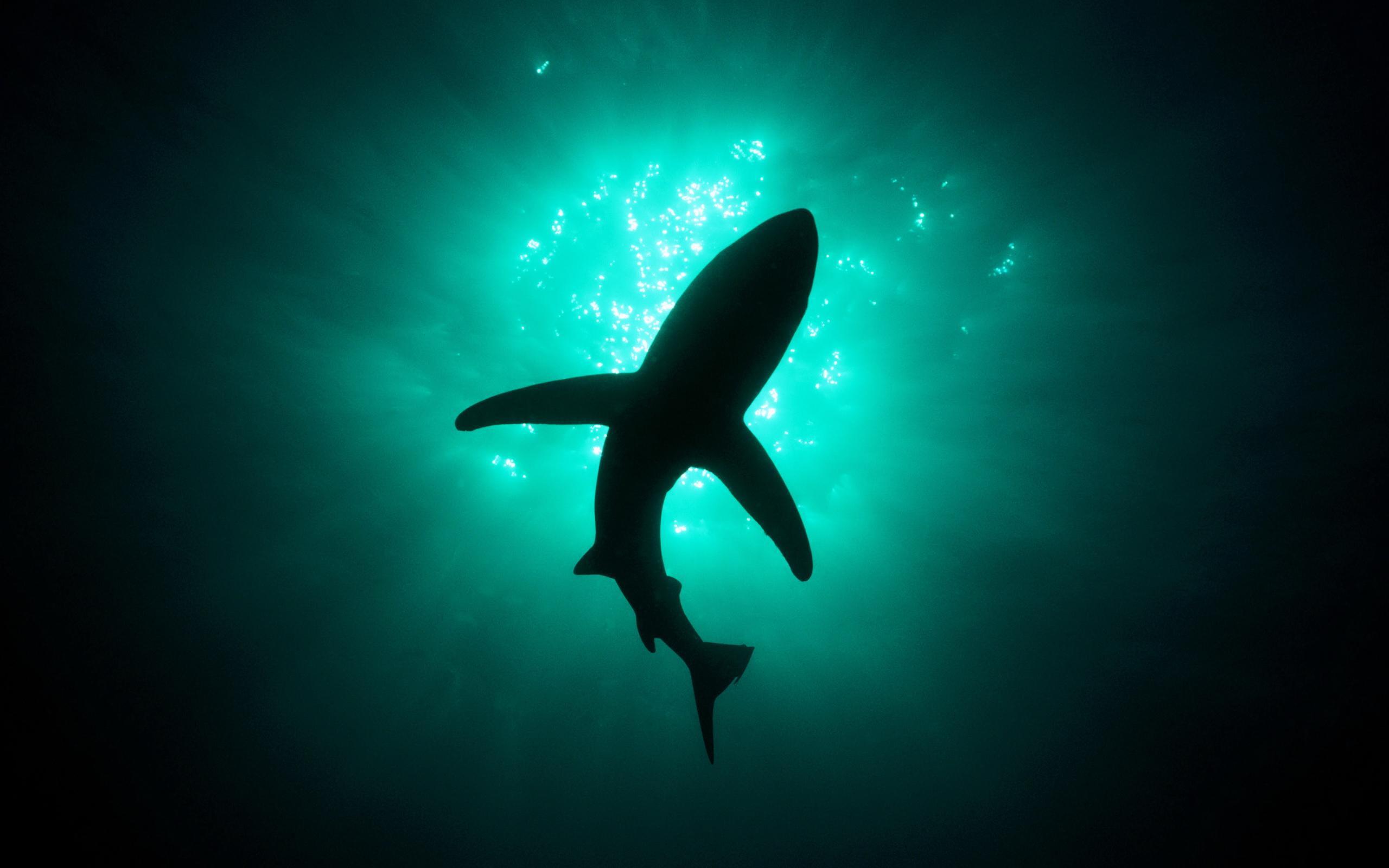 Shark Desktop Images