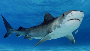 Shark Pics