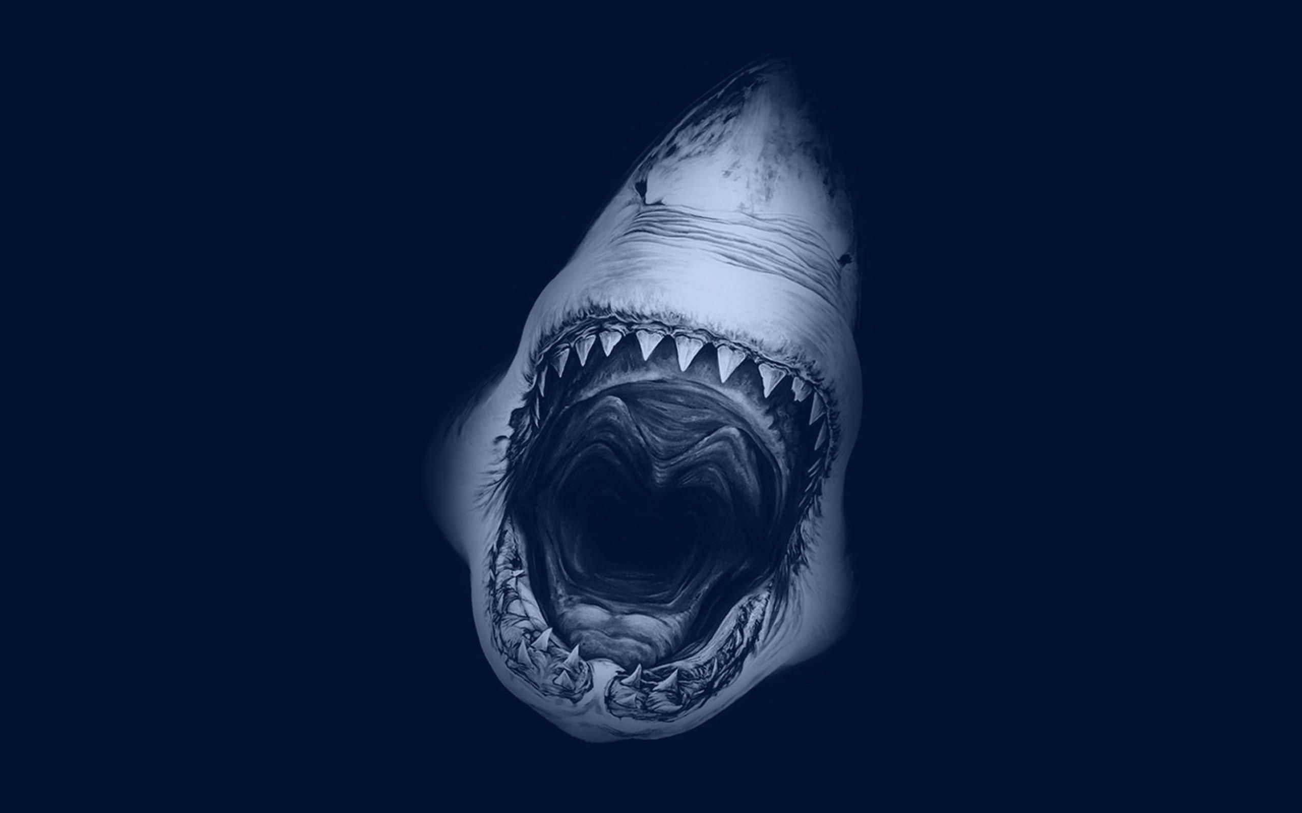 Shark For Desktop Background