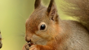Squirrel Free Download Wallpaper For Mobile