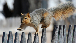 Squirrel HD Background