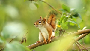 Squirrel High Definition Wallpapers