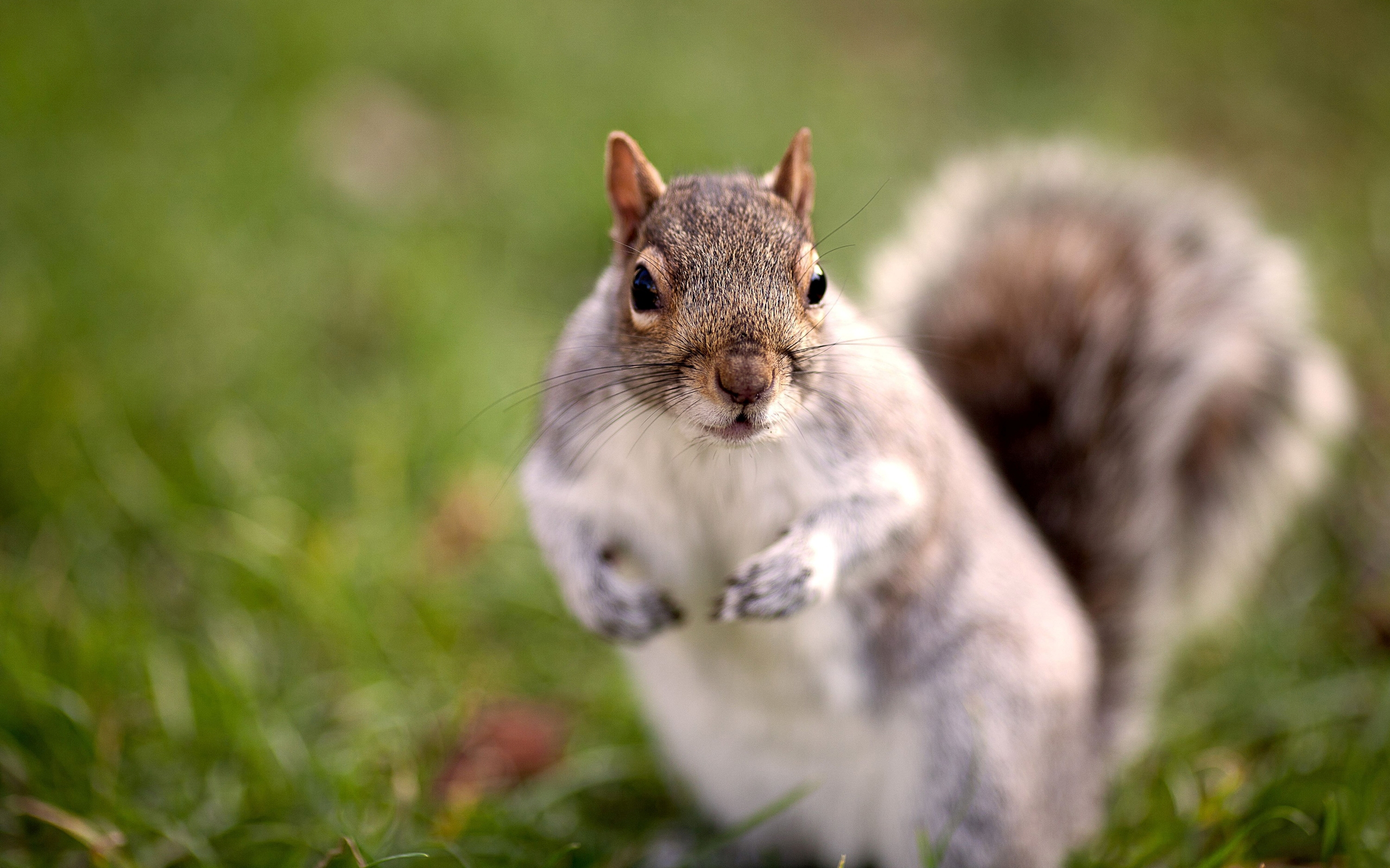 Squirrel wallpapers images photos pictures backgrounds - Funny squirrel backgrounds ...