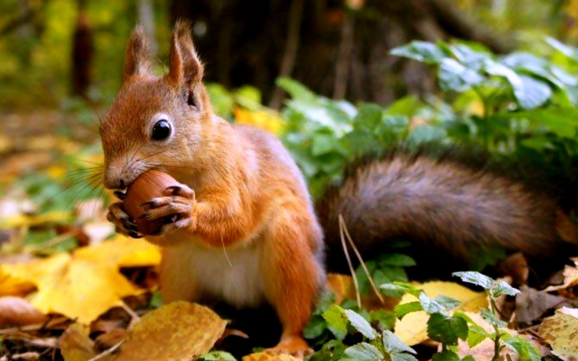 squirrel wallpaper - photo #7
