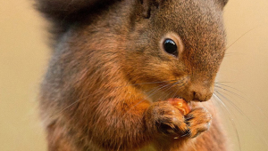 Squirrel Iphone HD Wallpaper