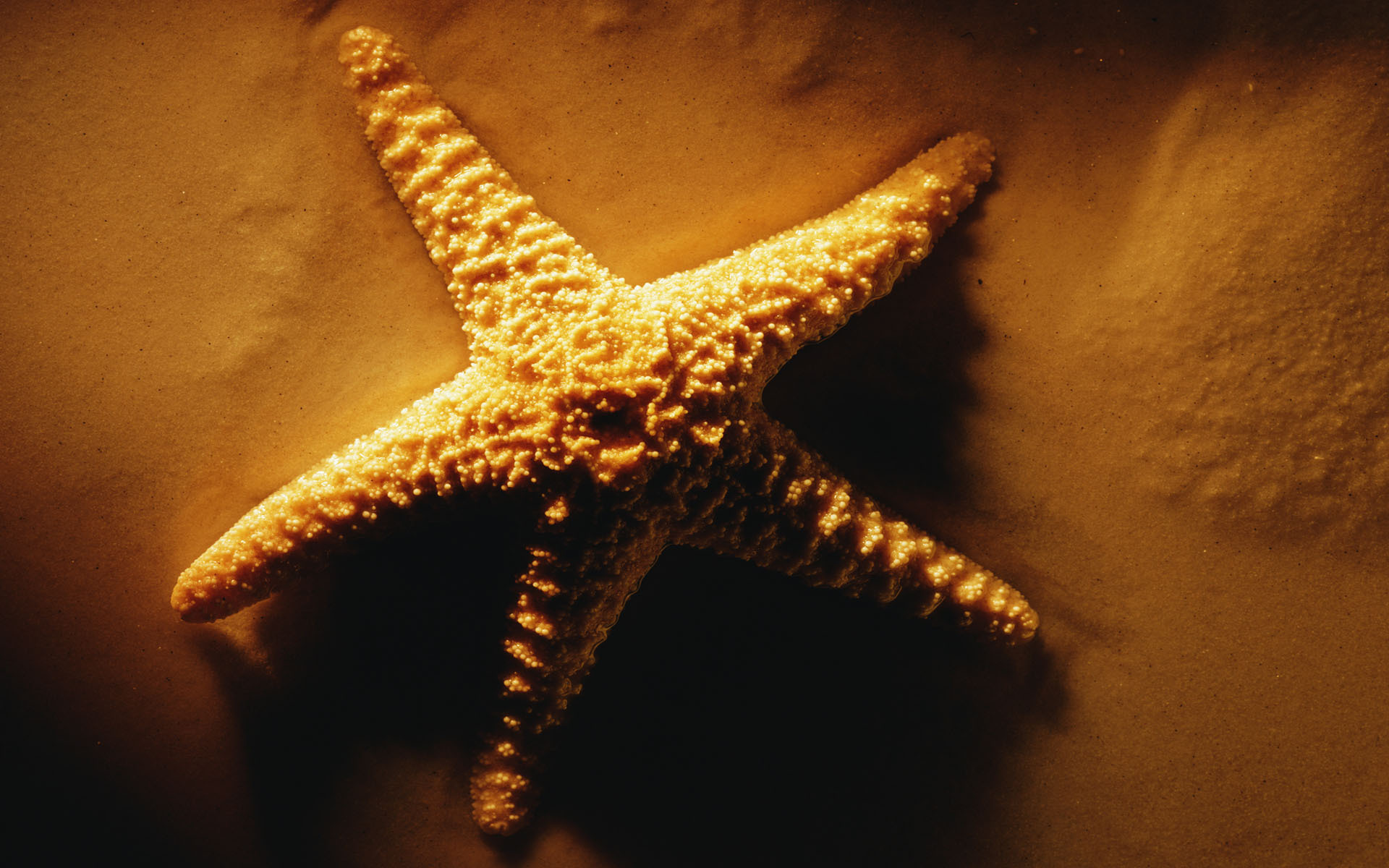 Starfish 4K